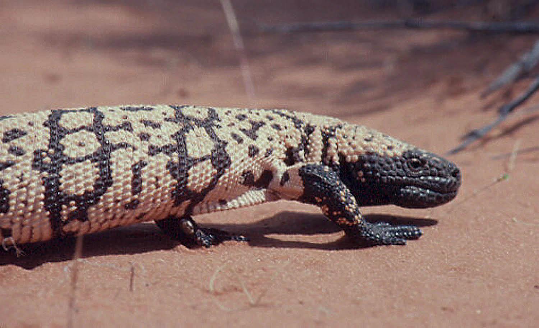 desert animals extreme survivors wild about utah