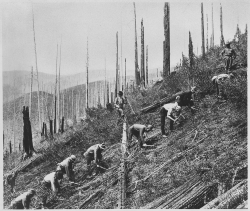 Click to view larger image of Civilian Conservation Corps enrollees clearing the land for soil conservation, Photo Courtesy National Archives and Records Administration, Franklin D. Roosevelt Library (NLFDR)
