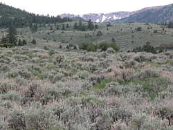 Sagebrush near Raft River, UT