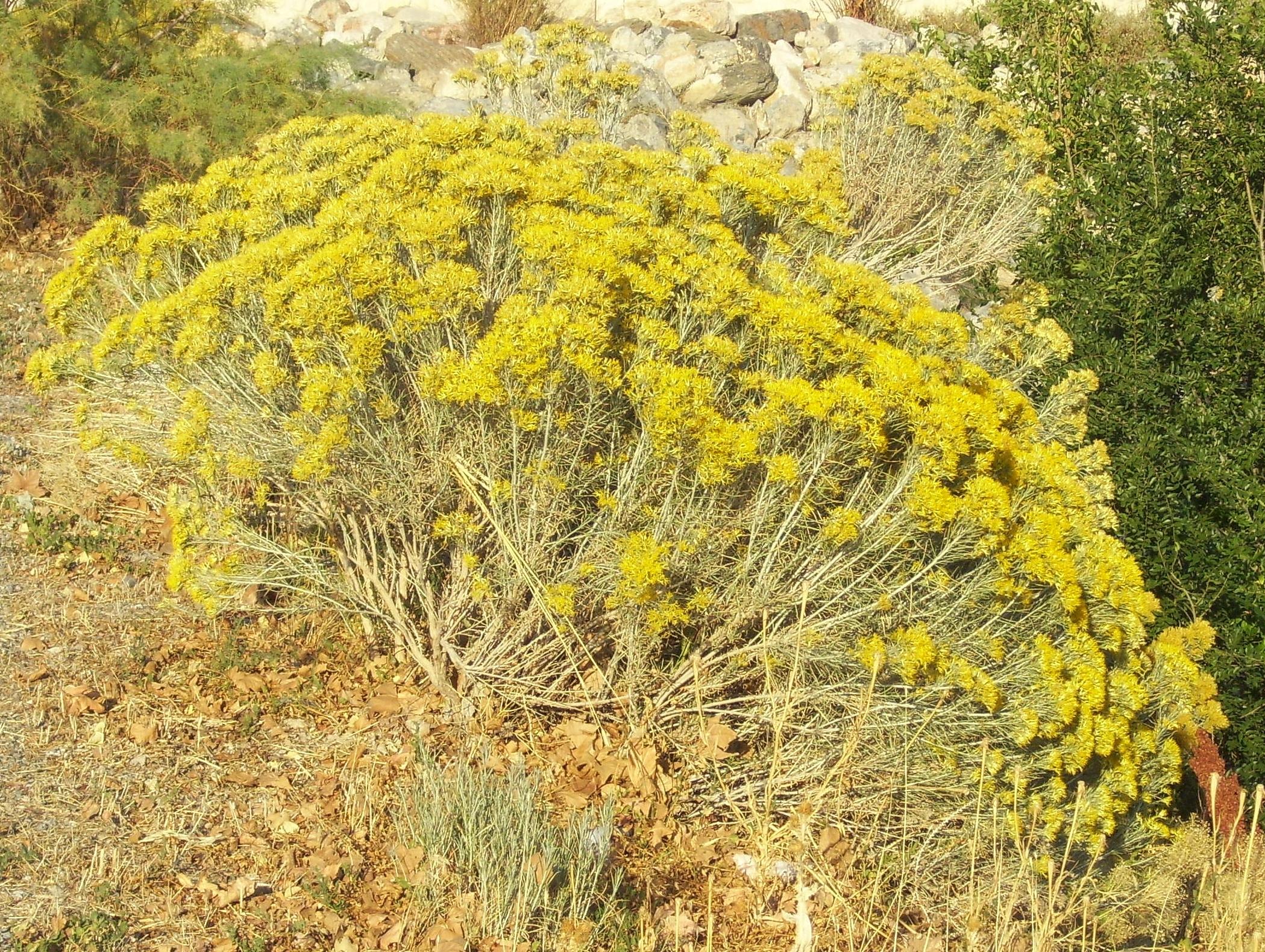 Woody Plants Of Utah Wild About Utah