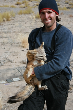 Kit Fox, click to view larger image, Photo Courtesy and Copyright © 2009 Bryan Kluever