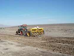 Reseeding the West After Fire