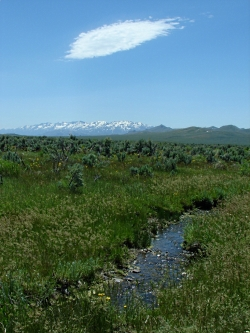 Willow Creek North of Wells, NV. Sagebrush at mid-distance. Route of the California Trail used by pioneers.