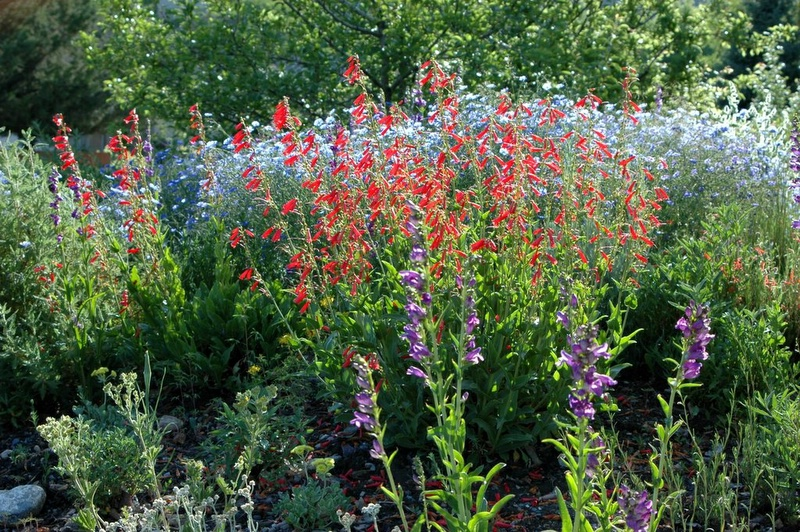 Xeric gardening with native plants wild about utah for Landscaping with native plants