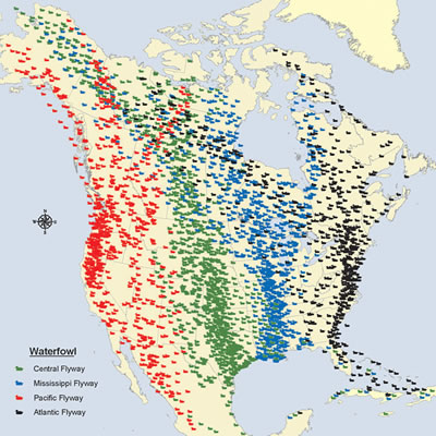 Bird Migration Archives Wild About Utah - Weather patterns map us and bird migration
