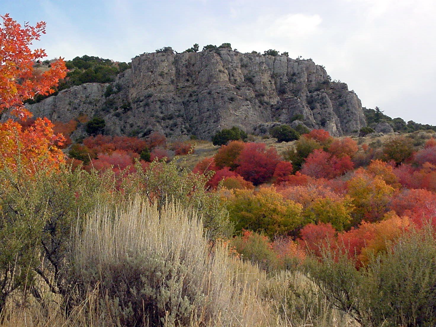 Click for a closer view of Fall color in Logan Canyon, Courtesy and Copyright Linda Kervin