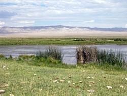 Leland Harris wetlands, Snake Valley, Utah, Courtesy Utah Geological Survey