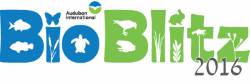 BioBlitz Logo, Courtesy Audubon International