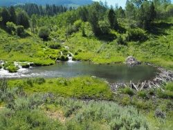 Leave it to Beaver: Beaver Dam and Pond Courtesy and Copyright Bethany Neilson, Photographer