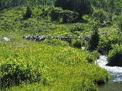 Leave it to Beaver: Below a Beaver Dam Courtesy and Copyright Bethany Neilson, Photographer