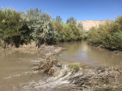 Beaver in Utah's Desert Rivers: A beaver dam built by resident beavers on the Price River. The dam helps hold the water on the desert landscape which benefits the native and endangered fish populations. Courtesy & © Emma Doden, Photographer