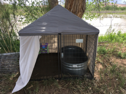 Quarantine Pen – Once a beaver is caught it is placed  in quarantine for three days before translocated so it will not spread disease.  The beaver is kept cool, well fed, and close to water. Courtesy & © Emma Doden, Photographer