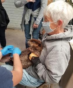 Beaver Health Exam Courtesy & © Mary Heers, Becky Yeager, Photographer