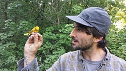 J.J. Horns, a graduate student in the University of Utah Biodiversity and Conservation Ecology lab, observes a yellow warbler (Setophaga petechia) that was recently measured and banded.