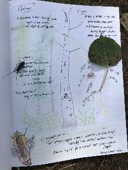 My 6/2020 Journal Page Courtesy & © Shannon Rhodes, Photographer