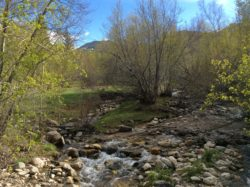 Riparian Zones: Clear Creek in the Spring Courtesy & Copyright Holly Strand, Photographer