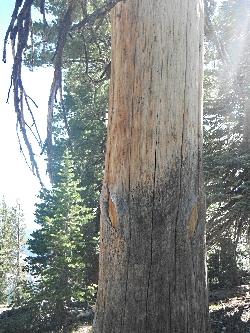 A Tree Wilderglyphs Josh Boling WildUtah032618