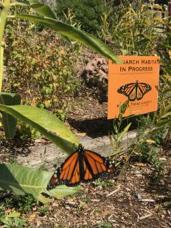 Monarch with Habitat In Progress Sign Courtesy & Copyright 2020, Jennifer Burghardt Dowd, Photographer https://raeenvironmentalinc.org