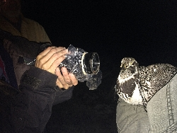 Documenting Grouse Trapping Courtesy & Copyright Nicki Frey, Photographer