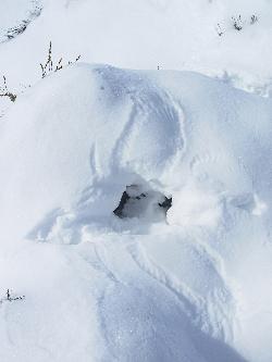 Grouse Snow Angel and Cave Courtesy & Copyright Nicki Frey, Photographer