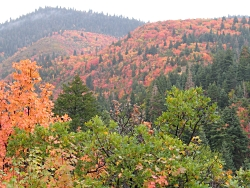 Poetry of the Forest: Fall Colors along the Nebo Loop between Payson, UT and HWY 132 between Nephi and Fountain Green. Courtesy USDA Forest Service
