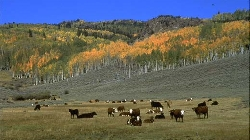 Grazing at Fishlake in Utah Courtesy USDA Forest Service