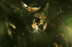 Bobcat in plants Courtesy US FWS Steve Hillebrand, Photographer