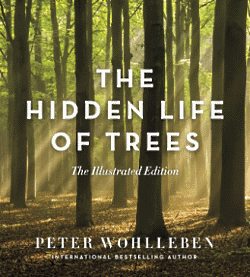 The Hidden Life of Trees – The Illustrated Edition Peter Wohlleben, Author, Jane Billinghurst, Translator Greystone Books Ltd.