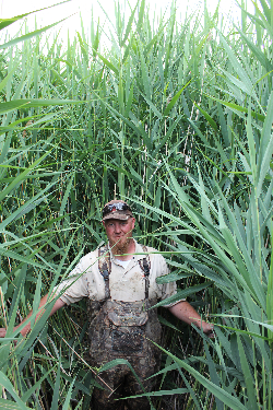 Wetland manager & former student in the Kettenring Lab, Chad Cranney in a stand of Phragmites australis Courtesy & © Karin Kettenring