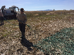 Experimental hydroseeding at Farmington Bay Waterfowl Management Area Courtesy & © Karin Kettenring 8. Seeds of several native wetland plant