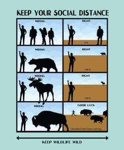 A New Beginning: Keep Your Social Distance and Keep Wildlife Wild Chart NPS/Matt Turner