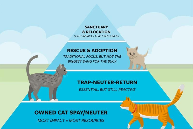 Inspired by diagrams for healthy diets, the community cat pyramid encourages a holistic approach to cat management and a strategic use of resources. Graphic by Patrick Ormsby/The Humane Society of the United States