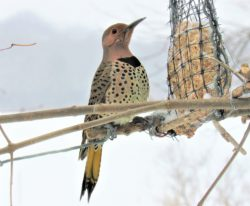 bird tv: Flicker, Courtesy Pixabay