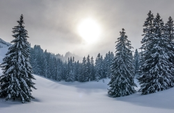 The Sun Still Shines in the Snowfall: Winter Courtesy Pixabay Joerg Vieli, Photographer