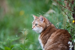Responsible Pet Ownership: Cat Courtesy Pixabay Genocre, photographer