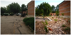 Ecological Transition through Permaculture Design: Before and After Permaculture Rain Garden USU Moab Photo Courtesy & © Roslynn Brain McCann, Photographer