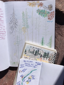 Wild About Nature Journaling: Nature Journals Courtesy & © Shannon Rhodes, Photographer