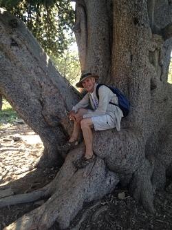 Jack in 560 year old Limber Pine tree 7/27/16 Courtesy & Copyright Hilary Shughart