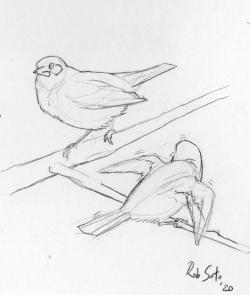 Fledging Bird Landing Courtesy & © Rob Soto, Artist