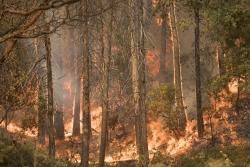 Ferguson Fire, Sierra National forest, California, 2018 Courtesy USDA Forest Service: Kari Greer, Photographer